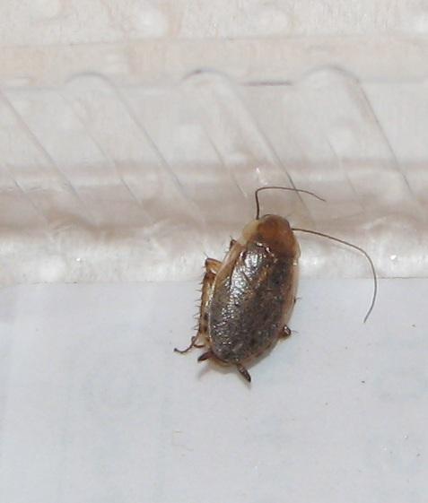 Unbekannte Insekten Identify Other Insects Actias