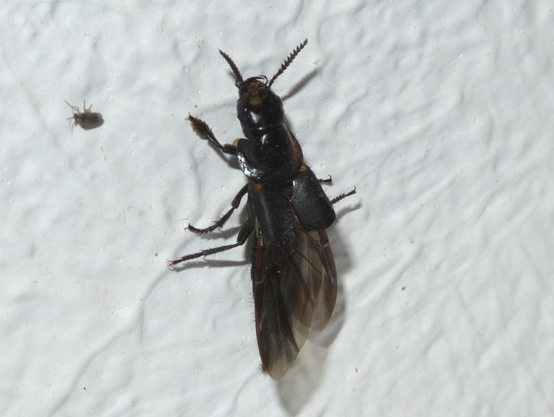 huch was ist denn das f r ein insekt insekten allgemein bestimmen actias. Black Bedroom Furniture Sets. Home Design Ideas