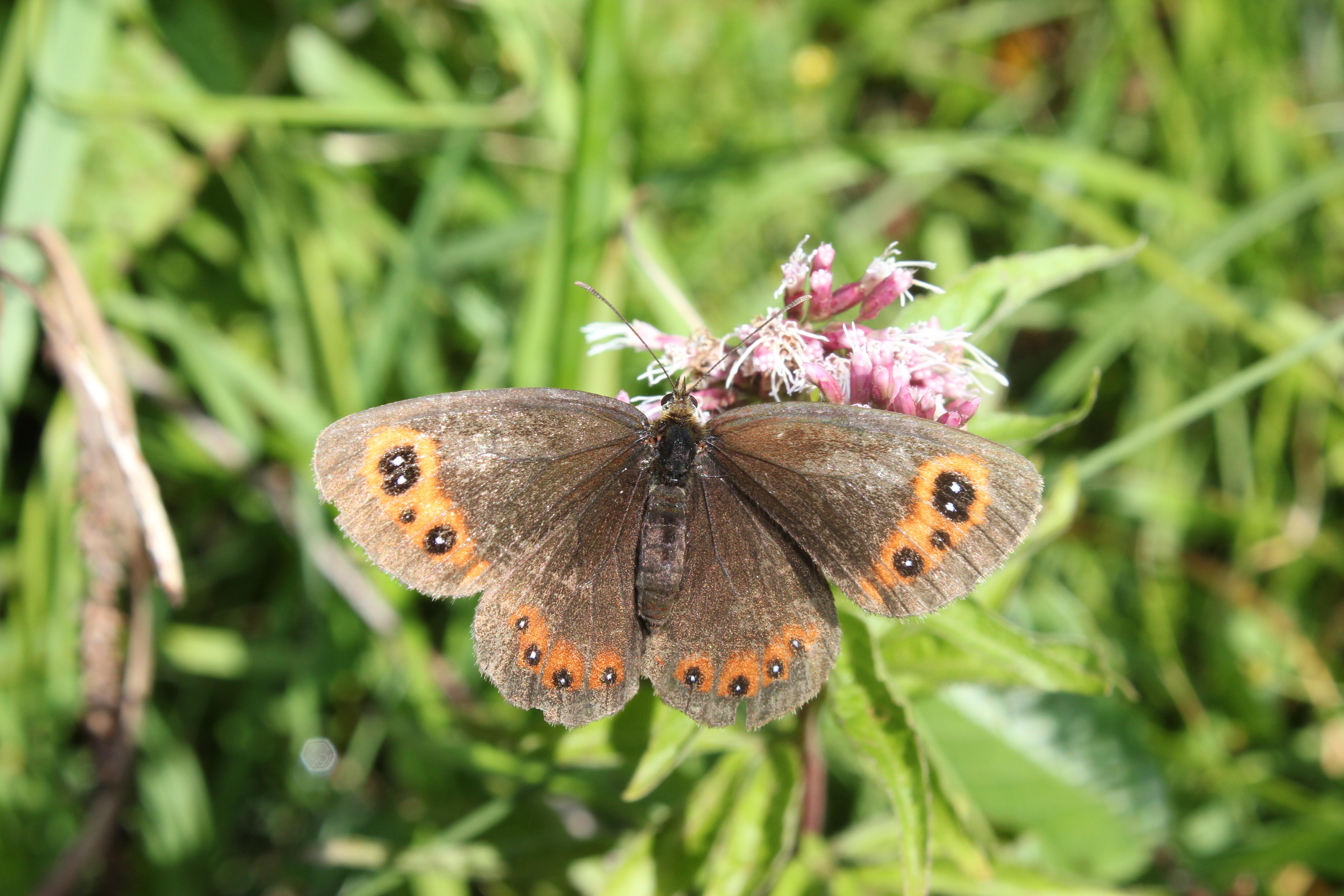 Pflanzen Schmetterlinge