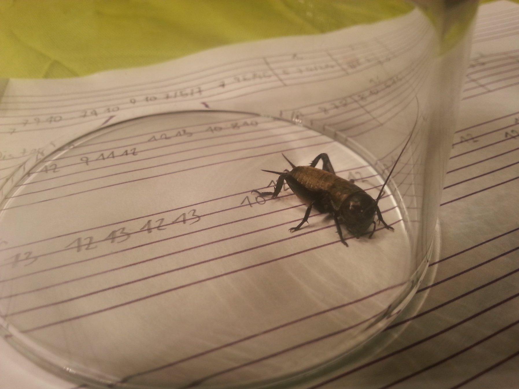 k fer in der wohnung identify a bug actias. Black Bedroom Furniture Sets. Home Design Ideas