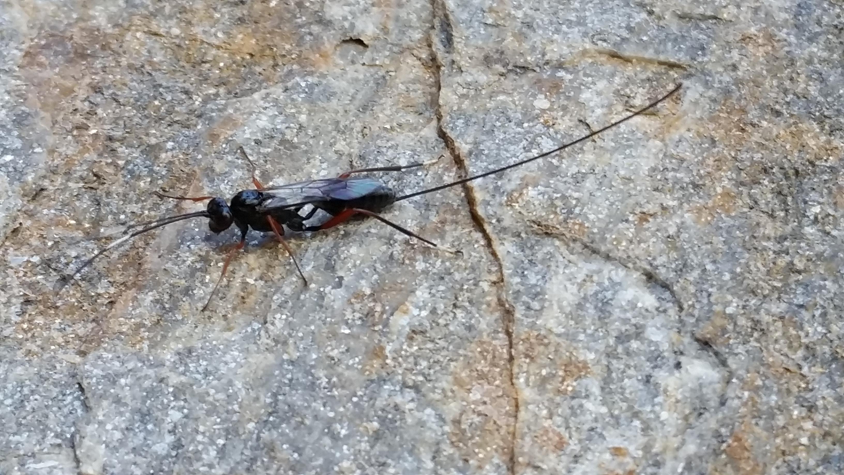 fliegende insekten bilder von fliegenden insekten klassefotos ergebnis f r fliegende insekten. Black Bedroom Furniture Sets. Home Design Ideas