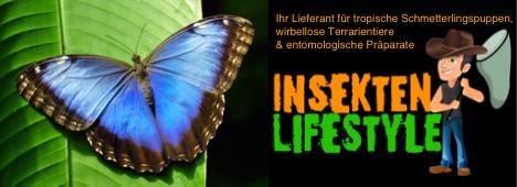 https://insektenlifestyle.com