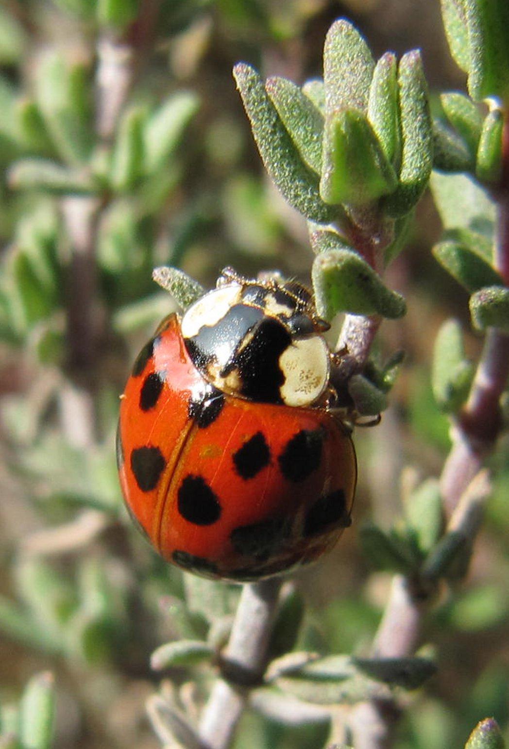 Käfer Im Oktober